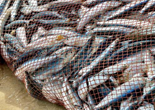 net-full-fish-nice-catch-26514505 (1)